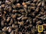 Arı Belgeseli