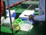 Kızıldeniz'de Balık Avımız