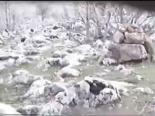 Tuzak Kurarak Yapılan Kınalı Keklik Avı