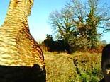 Çulluk Avında Çekilmiş Görüntüler