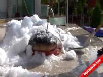 İstanbul'da 1 tonluk köpekbalığı yakalandı