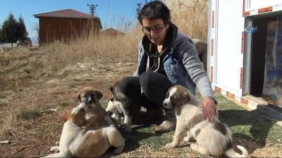 Şırnak'ta görev yapan doktor kendi imkanlarıyla sokak hayvanlarına bakıyor