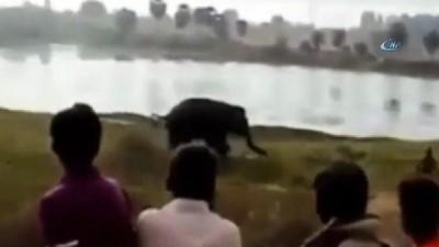 - Hindistan'da Fil Adama Saldırdı