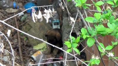 Apartman boşluğuna düşen yavru köpeği itfaiye ekipleri kurtardı