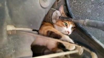 Otomobilde sıkışan kediyi itfaiye kurtardı - ADANA