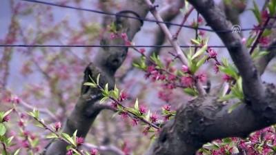 Yaş meyve sebze ihracatında 'verimli yıl' beklentisi - BURSA