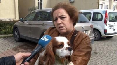 Bursa'da pitbull dehşeti kameraya böyle yansıdı