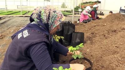 Diyarbakır çiçek bahçesine dönecek
