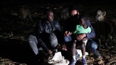Etiyopyalı Yusuf vahşi sırtlanları eliyle besliyor - HARAR