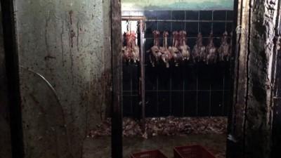 'Kaçak tavuk kesimi' operasyonu - ADANA