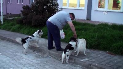 Köpeğe tekme atan kişi özür diledi - BARTIN