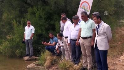 Uşak'ta 100 bin pullu sazan yavrusu göletlere bırakıldı - UŞAK