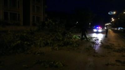 - Erzincan'da seyir halindeki aracın üzerine ağaç devrildi