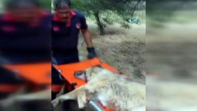 Günlerce aç ve susuz kalan köpek kurtarıldı