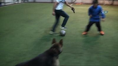 Kurt köpeğinin futbol tutkusu