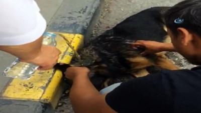 Duyarlı vatandaşlardan örnek davranış...Sıcaktan bayılan köpeği kendine getirmek için dakikalarca uğraştılar