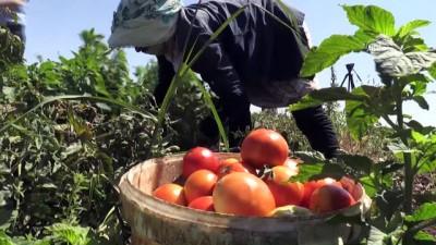 Kilisli çiftçiler üretmekten vazgeçmedi - KİLİS