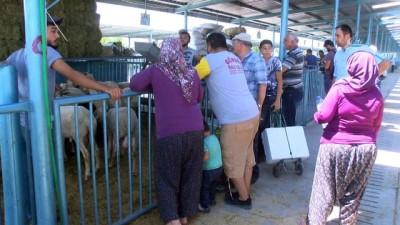Bayrama sayılı günler kala hayvan pazarında durgunluk yaşanıyor
