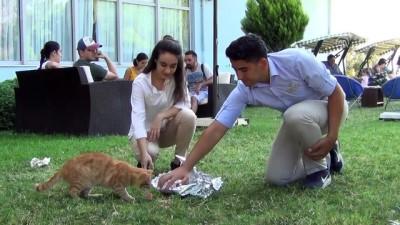 Uygulama oteli sokak hayvanlarına kucak açıyor - BALIKESİR