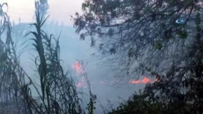 İzmir'de makilik alanda çıkan yangın paniğe neden oldu