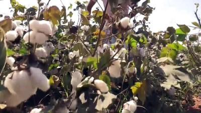 Pamuk tarlasından dünya şampiyonasına - ŞANLIURFA