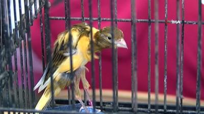 'Kanarya ve Kafes Kuşları Yarışması' renkli görüntülere sahne oldu