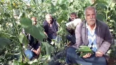 Mersin'deki sağanak - Silifke'deki seralar zarar gördü