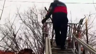 Ağaçta mahsur kalan kediyi itfaiye kurtardı - TOKAT