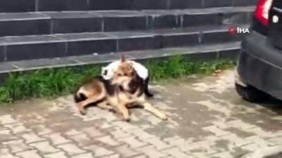 Kedi ile köpeğin dostluğu yürekleri ısıttı