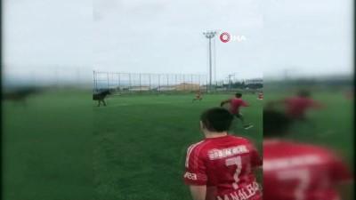 Futbol turnuvasında sahaya giren at korku dolu anlar yaşattı