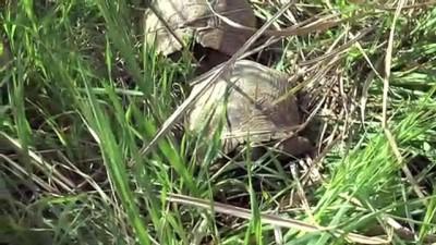 Kuyuda mahsur kalan kaplumbağaları itfaiye kurtardı - DENİZLİ