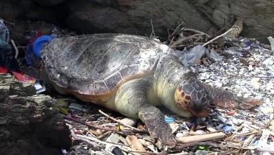 Ölü bir caretta caretta sahile vurdu - BALIKESİR