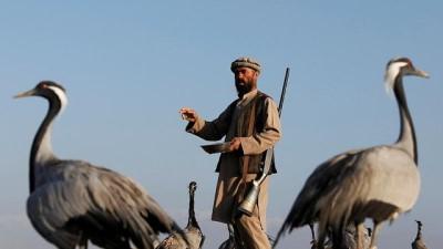 | Savaşın gölgesinde ayakta tutulmaya çalışılan meslekler: Bir Afgan avcının turna avı