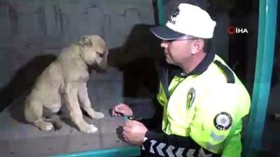 Kafası bidona sıkışan yaralı köpeğe polis sahip çıktı