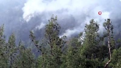 Bilecik'te orman yangını: 2 dekar alan kül oldu