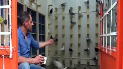 Veresiye güvercin problemine şaşırtıcı çözüm...Güvercin almak için sabıka kaydı ve 3 memur kefil