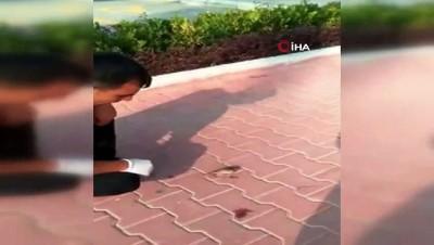 Ayağı yere atılan sakıza yapışan kuşu böyle kurtardı