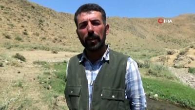 İran'da iş bulamadı, Hakkari'de çobanlık yapıyor