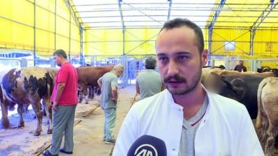 Hayvan pazarlarında kurban hareketliliği - İSTANBUL