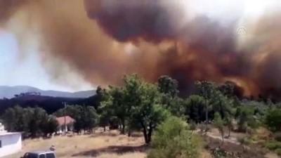 Bodrum'daki orman yangını