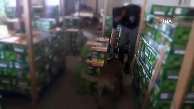 Kapıkule'de hurma taşıyan tırdan 455 kilogram eroin çıktı