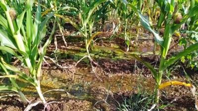 'Vahşi sulama' toprağa ve ürüne zarar veriyor - ŞANLIURFA