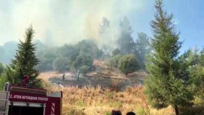 Orman ve zeytinlik yangını - AYDIN