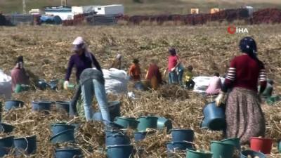 Patates tohumu ithalatına son verecek çalışma