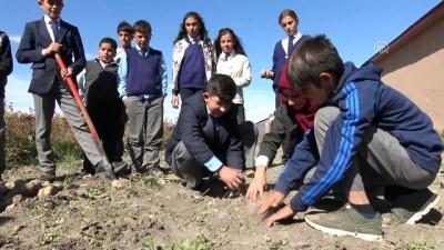 Öğrenciler okul bahçesinde patates üretti - KARS