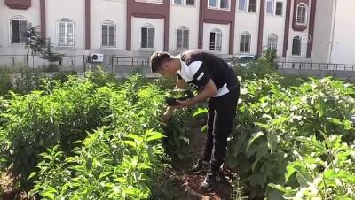 Öğrenciler kendi ürettikleri sebze ve meyvelerle besleniyor - MARDİN