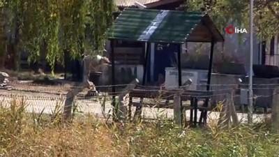 Mehmetçiğin bulduğu öksüz ayı Meyvan işte bu hayvan barınağında tutuluyor