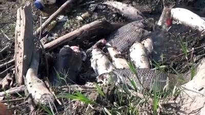 Bursa'da çevre felaketi...Yüzlerce balık ölü bulundu