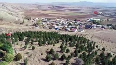 Bu köyde herkesin bir dikili ağacı var