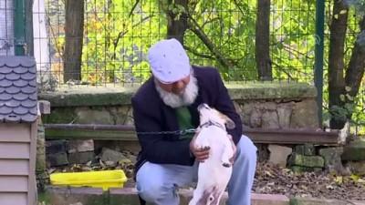 Nefessiz kalan köpeği kalp masajıyla hayata döndürdü - KOCAELİ